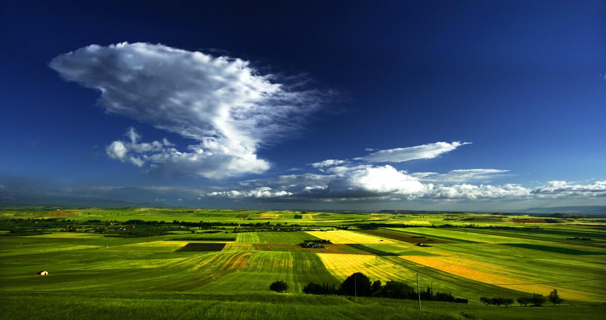 Le proprietà benefiche dell'olio extra vergine di oliva