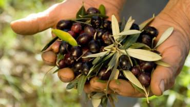 Perchè scegliere l'olio di oliva extravergine biologico